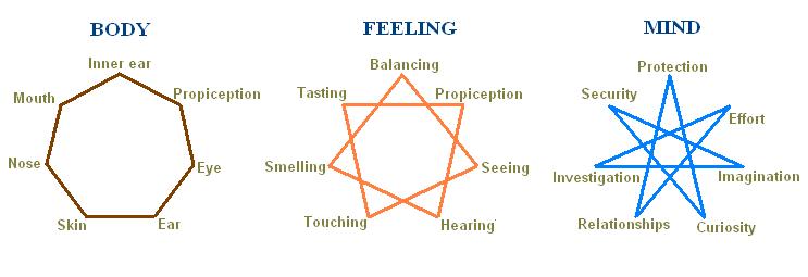 7senses-diagram1